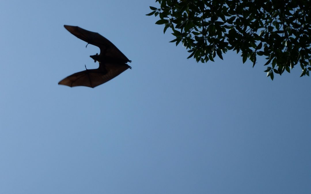Bat Detecting Walk at Gunnislake, 12-09-18, 1830-2030