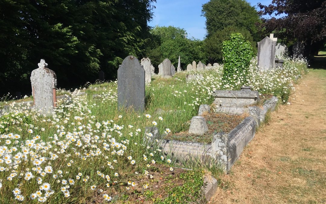 Calstock Living Churchyard Project